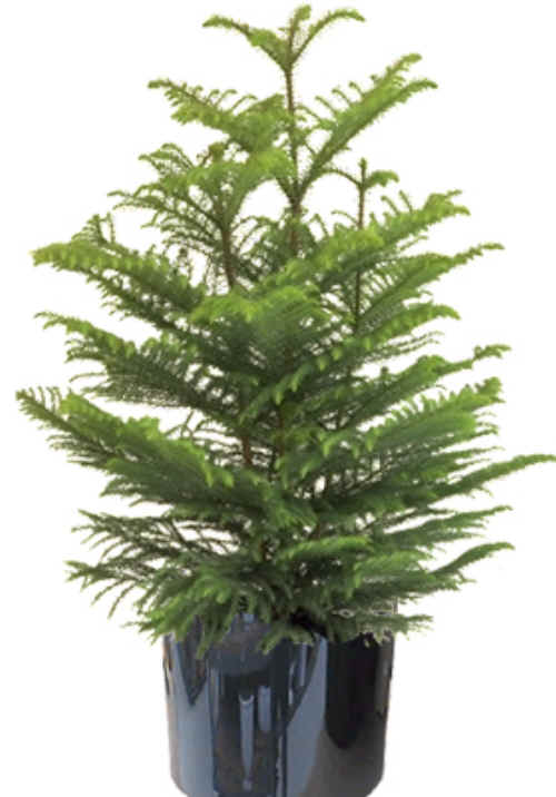 Indoor Plants Archives - Ponseti Landscaping on