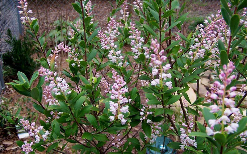 Planting Under Deciduous Trees : Filed under deciduous shrubs trees shade plants