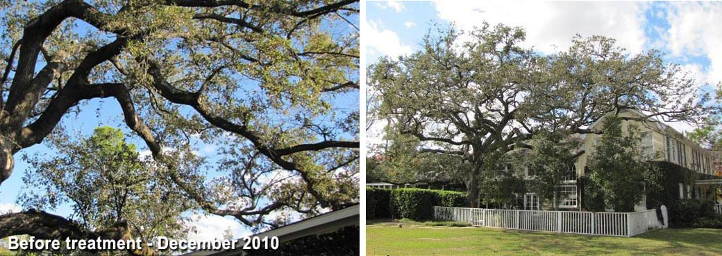 tree-rescue-new-orleans