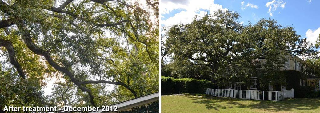 tree-rescue--uptown-new-orl